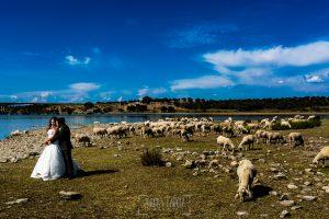 Boda en Almaraz, Cáceres, Marta y Samuel, realizada por Johnny Garcia, fotógrafo de bodas en Extremadura, un retatro de Marta y Samuel en el campo rodeado de ovejas