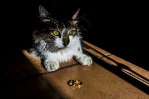 Boda en Íscar, Valladolid, de Marta y Oliver realizada por Johnny Garcia, fotógrafo de bodas en Valladolid, el gato de Marta junto a los anillos