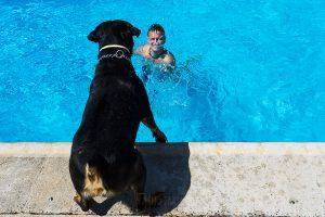 Bodas en Béjar, de Gema y Alberto realizada por el fotógrafo de bodas en Béjar, Salamanca, Johnny García, Alberto con Drako, su perro.