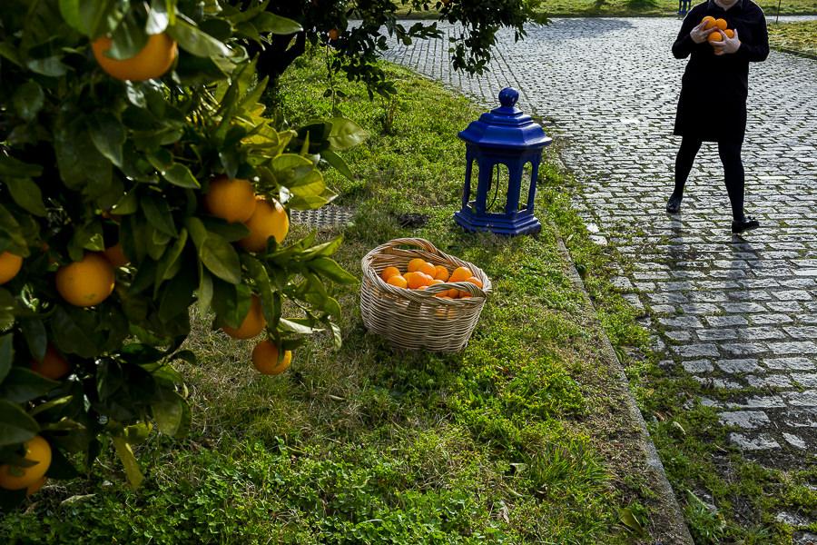 Boda en Arroyomolinos de la Vera de Tamara y David realizada por el fotógrafo de bodas en Cáceres Johnny García, un detalle del jardín del Hotel Peña del Alba