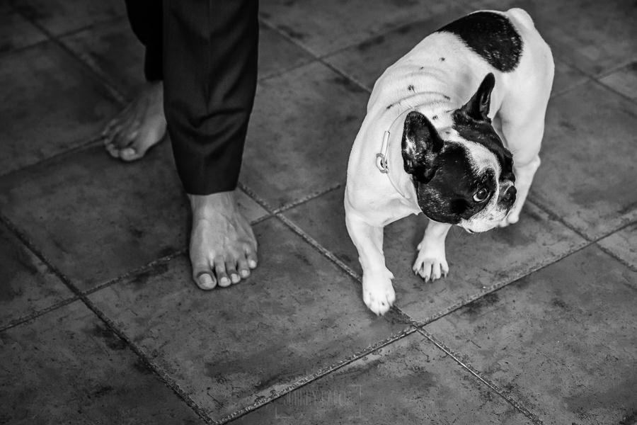 Boda en Villaviciosa de Carmen y David realizada por el fotógrafo de bodas en Asturias Johnny García. Un detalle de los pies de David junto a su perrita.