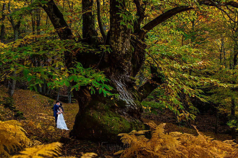 Boda en Segura de Toro de Araceli y César, captada fotográficamente por elfotógrafo de bodas en Cáceres Johnny García, los novios en la sesión de postboda realizada en los Castaños del Temblar de Segura de Toro.