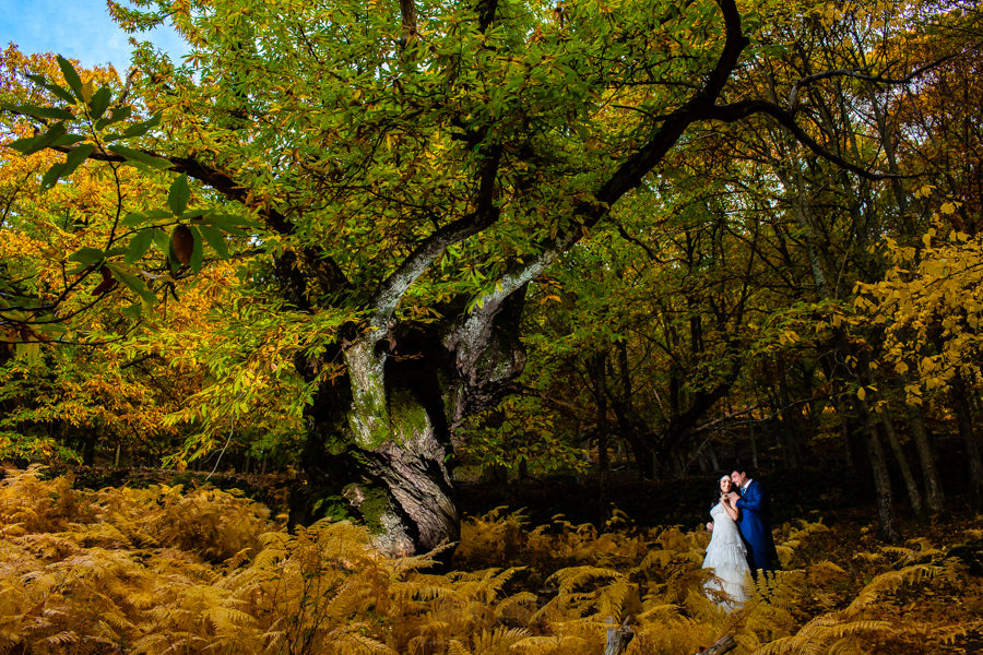 Boda en Segura de Toro de Araceli y César, captada fotográficamente por elfotógrafo de bodas en Cáceres Johnny García, la pareja al lado de un castaño milenario de Segura.
