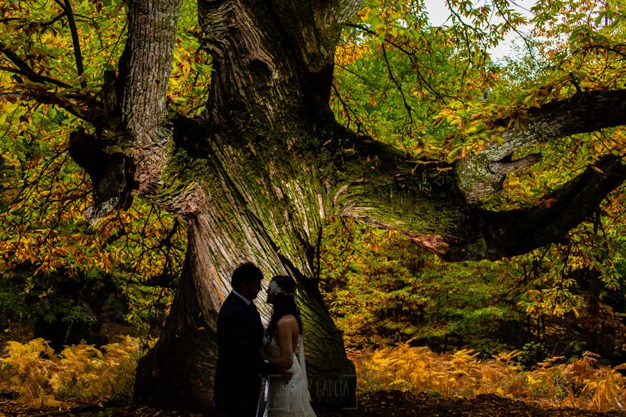 Boda en Segura de Toro de Araceli y César, captada fotográficamente por elfotógrafo de bodas en Cáceres Johnny García, la silueta de los novios delante del tronco de un castaño centenario.